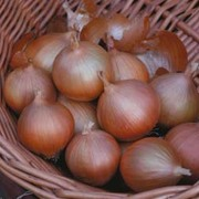 Onion 'Hi Keeper' F1 Hybrid - 1 packet (80 onion seeds)