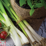 Spring Onion 'White Lisbon' - 1 packet (650 spring onion seeds)