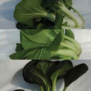 Pak Choi Collection - 3 packets - 1 of each variety (450 pak choi seeds in total)