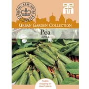Pea 'Avola' (First Early) - Kew Collection Seeds - 1 packet (250 pea seeds)