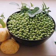 Pea 'Celebration' (First Early) - 1 packet (300 pea seeds)
