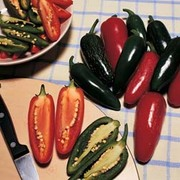 Chilli Pepper 'Summer Heat' F1 Hybrid (Hot - Jalapeno) - 1 packet (10 chilli pepper seeds)