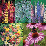 Tall Perennial Mix - 5 varieties - 1 packet of each (345 perennial seeds in total)