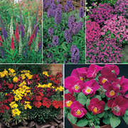 Short Perennial Mix - 5 varieties - 1 packet of each (710 perennial seeds in total)