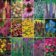 Perennial Seed Mix - 15 varieties - 1 packet of each (1277 perennial seeds in total)