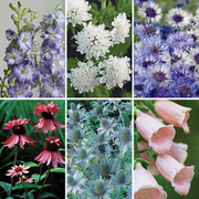 Flower Border Seed Mix (Tall) - 6 varieties - 1 packet of each (870 seeds in total)
