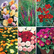 Flower Border Seed Mix (Short) - 6 varieties - 1 packet of each (690 seeds in total)
