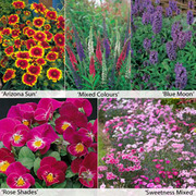 Perennial Flower Border Seed Collection (Short) - 5 varieties - 1 packet of each (180 perennial seeds in total)