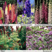 Perennial Flower Border Seed Collection - 15 varieties - 1 packet of each (3187 perennial seeds in total)