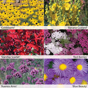 Perennial Colour Collection - 12 Powerliner plug plants - 2 of each variety