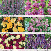 Perennial Fragrant Collection - 12 Powerliner plug plants - 2 of each variety