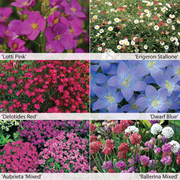 Perennial Ground Cover Collection - 12 Powerliner plug plants - 2 of each variety