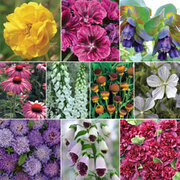 Specially Selected Perennials Collection - 10 perennial Postiplug plants - 1 of each variety