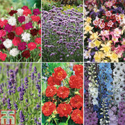 Best Selling Perennial Collection - 36 plug plants - 6 of each variety