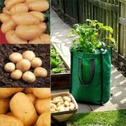 Potato Patio Planter Collection - 3 potato patio planters + 15 potato tubers - 5 of each variety