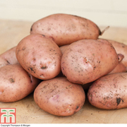 Potato 'Sarpo Mira' - 1kg (16-18 potato tubers)