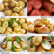 Potato 'Popular First Earlies Collection' - 60 potato tubers - 10 of each variety