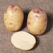 Potato 'Kestrel' (Exhibitor) - 10 exhibit grade potato tubers