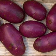 Potato 'Blue Danube' - 40 potato tubers