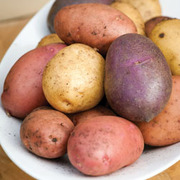 Potato 'Sarpo Collection' - 30 potato tubers - 10 of each variety