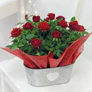 Red Rose - Gift - 1 x Red Rose Duo in Zinc Trough