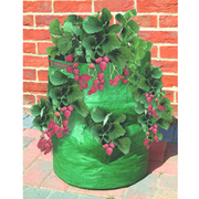 Reusable Patio Strawberry/Herb Planter Bag - 1 patio bag
