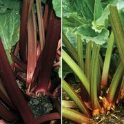 Rhubarb RHS Collection (Spring/Autumn Planting) - 2 rhubarb plants - 1 of each variety