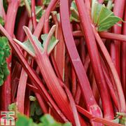 Rhubarb 'Fulton's Strawberry Surprise' Patio Kit - 2 x 9cm potted rhubarb plants + 2 patio bags