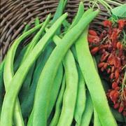 Runner Bean 'Enorma' - 1 packet (40 runner bean seeds)