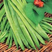 Runner Bean 'Goliath' - Heritage - 1 packet (40 runner bean seeds)
