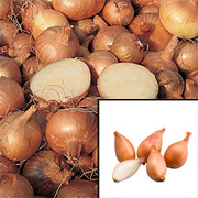 Shallot 'Gourmet Collection' (Spring Planting) - 40 shallot sets - 20 of each variety