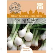 Spring Onion 'Pompeii' - 1 packet (300 spring onion seeds)