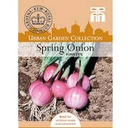 Spring Onion 'Purplette' - 1 packet (300 spring onion seeds)