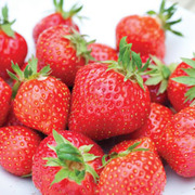 Strawberry 'Irresistible' (EM1294) (Mid Season) - 12 strawberry bare roots