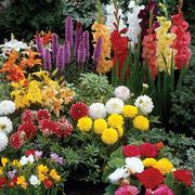 Summer Bulb Collection - 100 summer bulb mix