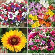Summer Garden Plant & Bulb Bundle - 1 saver bundle (232 plants & bulbs)