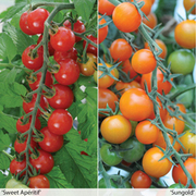 Sweetest 'Tomato Duo' - 2 packets - 1 of each variety (18 tomato seeds in total)