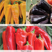 Sweet Pepper 'Tasty Mix All Season' - 1 packet (6 sweet pepper seed mix)