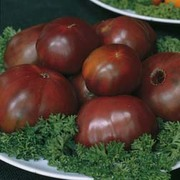 Tomato 'Black Russian' - Heritage - 1 packet (30 tomato seeds)