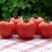 Tomato 'Orkado' F1 Hybrid - 1 packet (8 tomato seeds)