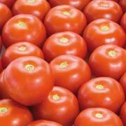 Tomato 'Satyna' F1 Hybrid - SowStrong® Collection - 1 packet (8 tomato seeds)