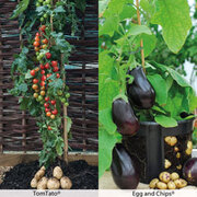 TomTato® and Egg & Chips® Duo - 2 x 9cm potted plants - 1 of each variety