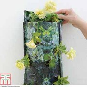 Triple Flower Pouch™ - 1 triple flower pouch