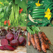 Vegetable Seed Collection - 4 packets of vegetable seed (1 of each variety)