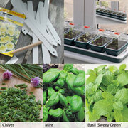 Windowsill Herb Kit - 1 collection