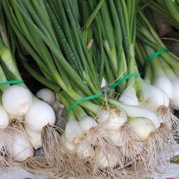 Onion 'Paris Silver Skinned'