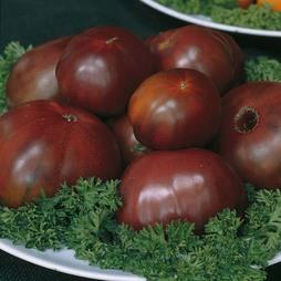 Tomato 'Black Russian' - Heritage