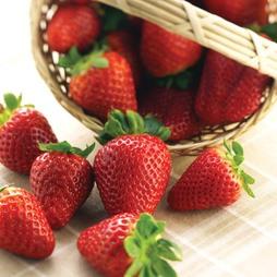 Strawberry 'Albion' (Everbearer/ All Season)