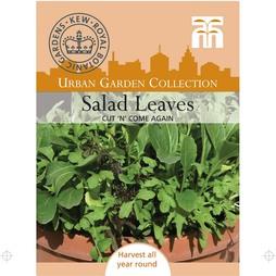 Salad Leaves 'Cut 'n' Come Again'