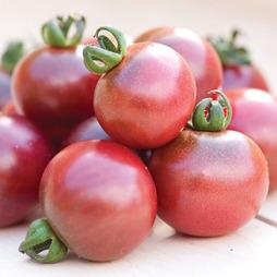 Tomato 'Rosella'